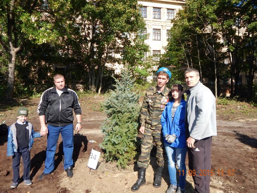Голубые ели в Петрозаводске