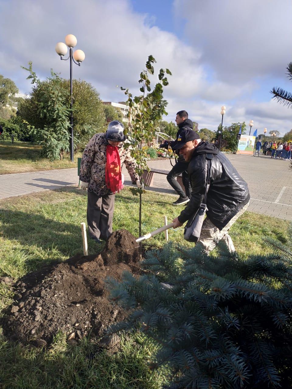 Посади своё дерево