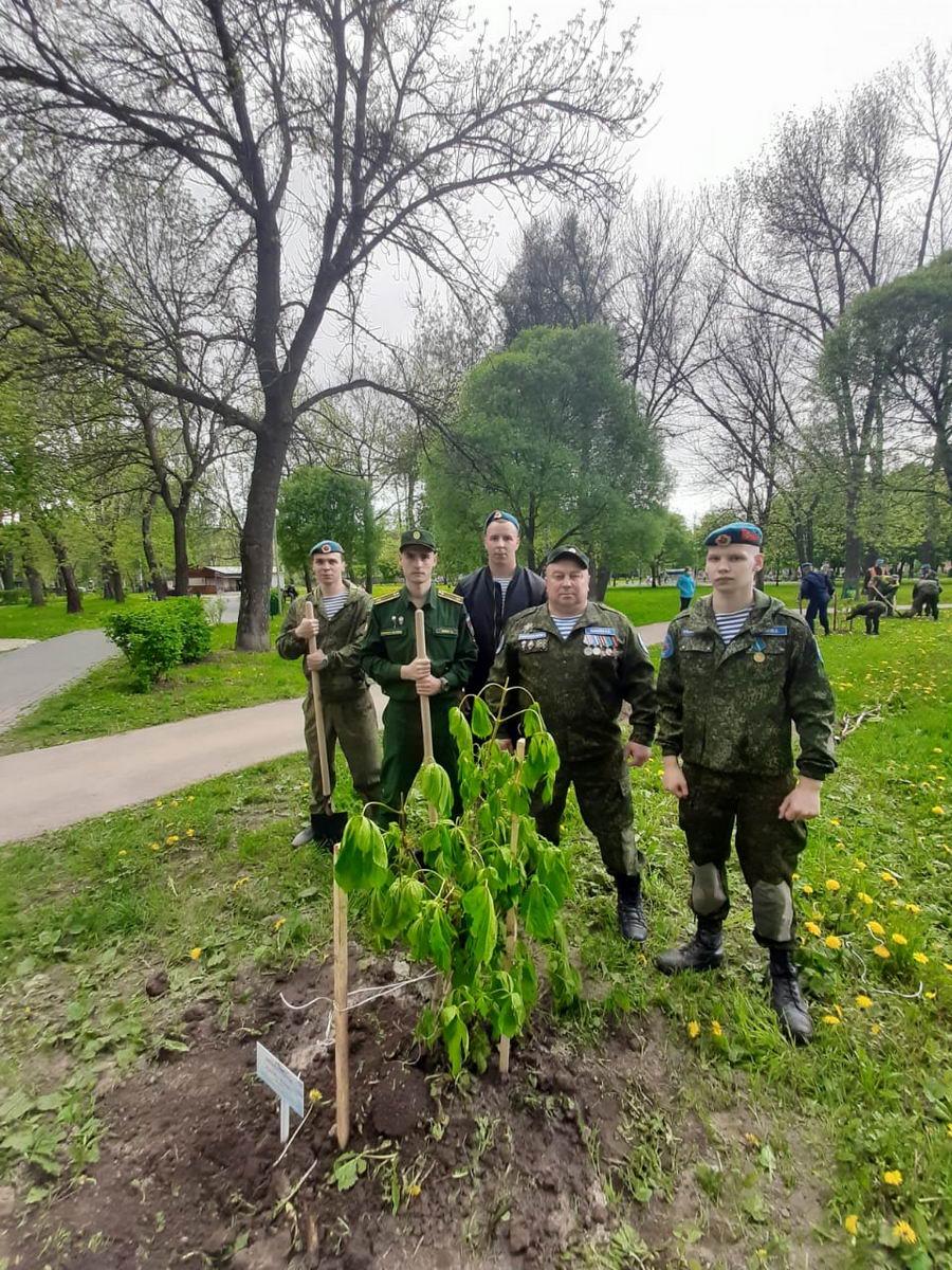 Сажаем каштаны в память о погибших солдатах